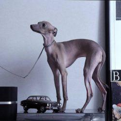 Собака и Jaguar XJ